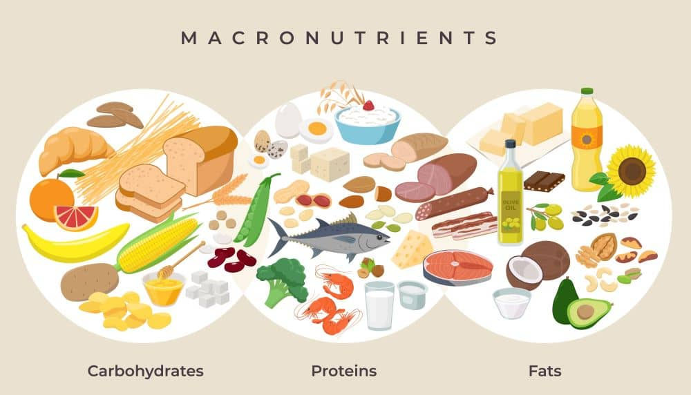 The nutrients that make up the food we eat are macronutrients.