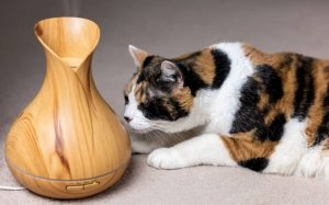 The main danger posed to cats by essential oils is respiratory irritation.